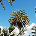 Palm City by Aimee L Maher ALM GALLERY