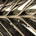 Palms E Sepia by Rob Hans