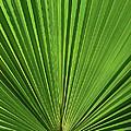 Palm Fan Design by Margaret Saheed