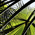 La Palm 3  by Gilbert Artiaga