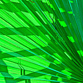 Palm Frond by Ben Graham