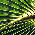 Palm Frond by Kay Lovingood