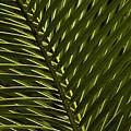 Palm Frond Patterns by Nancy Myer