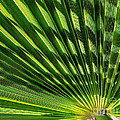 Palm Frond by Robert Bales
