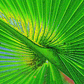 Palm Frond Work A by David Lee Thompson
