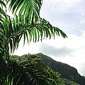 Palm Fronds El Yunque by Jon William Lopez
