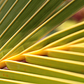 Palm Fronds by Sharon Mau