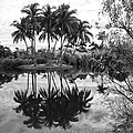 Palm Island  by Christiane Schulze Art And Photography