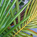 Palm Leaf Abstract by Duane McCullough