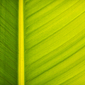 Palm Leaf Macro Abstract by Adam Romanowicz