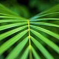 Palm Leaf Pattern by Charmian Vistaunet