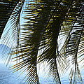 Palm Leaves by Mats Silvan