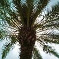 Palm Light by Deborah Lacoste