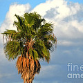 Palm by Mary Machare
