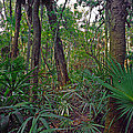 Palm Menagerie. Highlands Hammock. by Chris  Kusik