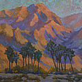 Palm Oasis At La Quinta Cove by Diane McClary