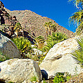 Palm Oasis On Borrego Palm Canyon Trail In Anza-borrego Desert Sp-ca by Ruth Hager