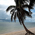 Palm On The Beach by Christiane Schulze Art And Photography