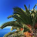 Palm Over The Sea by Antonio Scarpi