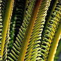 Palm Reading by Rosanne Jordan
