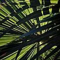 Palm Shadows by Joe Kozlowski