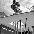 Palm Springs Animal Shelter Palms Bw Palm Springs by William Dey