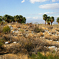 Palm Springs Indian Canyons View  by Ben and Raisa Gertsberg