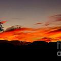 Palm Sunrise by Robert Bales