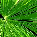 Palm by Tina Meador