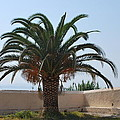 Palm Tree 3 by George Katechis