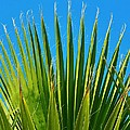 Palm Tree And Blue Sky 2/06 by Mark Lemmon