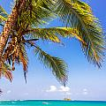 Palm Tree And Caribbean by Jess Kraft