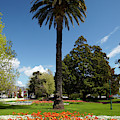 Palm Tree And Flower Gardens, Seymour by David Wall