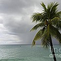 Palm Tree And Ocean by Sophie Vigneault
