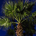 Palm Tree At Night by Zina Stromberg