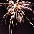 Palm Tree Fireworks by David Parsley