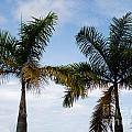 Palm Tree In Costa Rica by DejaVu Designs