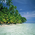 Palm Tree Lined Beach Papua New Guinea by Kevin Deacon