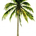 Palm Tree Number 2 by Michael Vigliotti