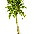 Palm Tree Number 4 by Michael Vigliotti