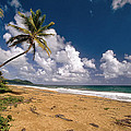 Palm Tree On Maunabo Beach Puerto Rico by George Oze