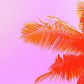 Palm Tree On Sky Background. Palm Leaf by Slavadubrovin