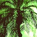 Palm Tree by Peter Dombrowski