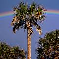 Palm Tree Rainbow by Mic Smith