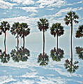 Palm Tree Reflection by Aimee L Maher ALM GALLERY