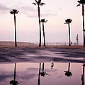 Palm Tree Reflections by Art Block Collections