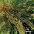 Palm Tree by Ruta Naujokiene