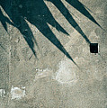 Palm Tree Shadow On Wall With Holes by Silvia Ganora
