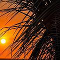 Palm Tree Sunset by Jess Kraft