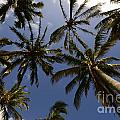 Palm Trees 3 by Bob Christopher